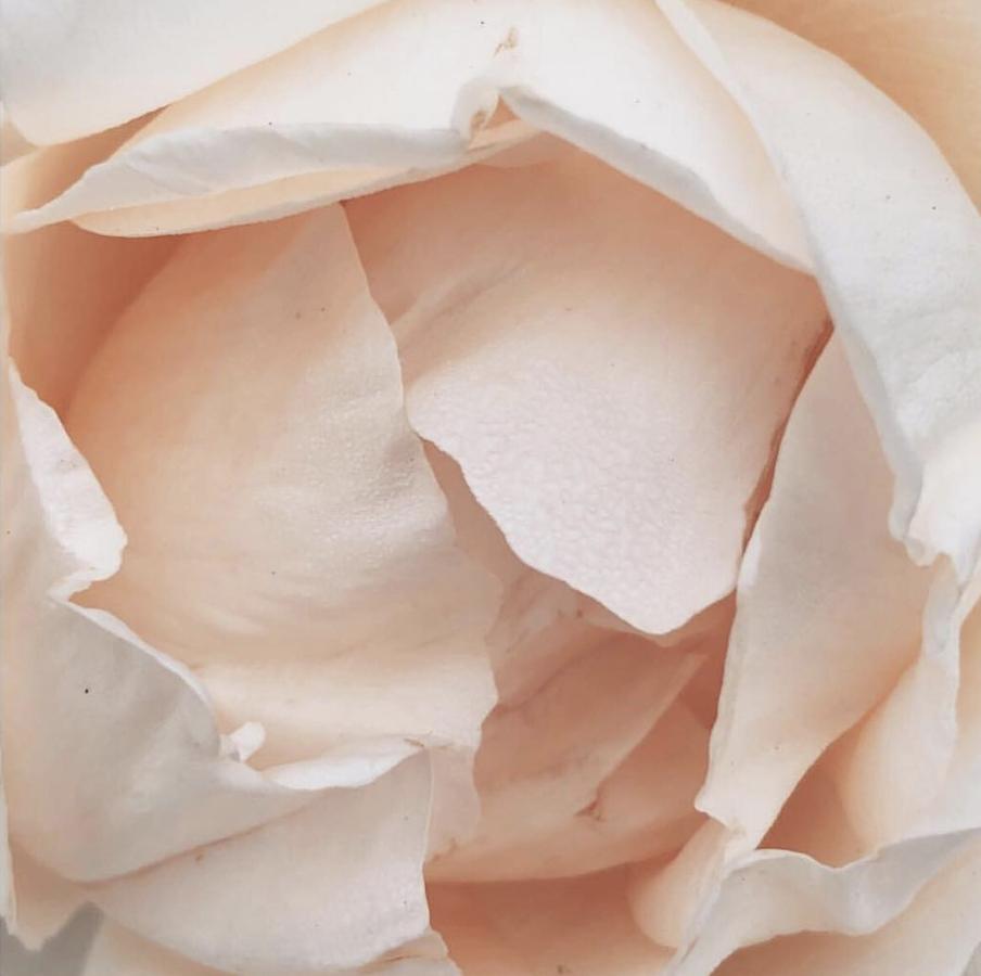 rose rebecca campbell